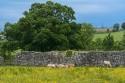 20130625_Schottland_00207
