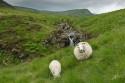 20130716_Schottland_06124